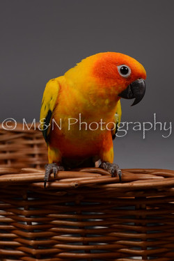 M&N Photography -DSC_2124
