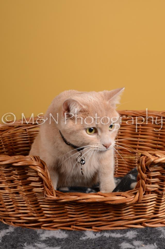 M&N Photography -DSC_4798