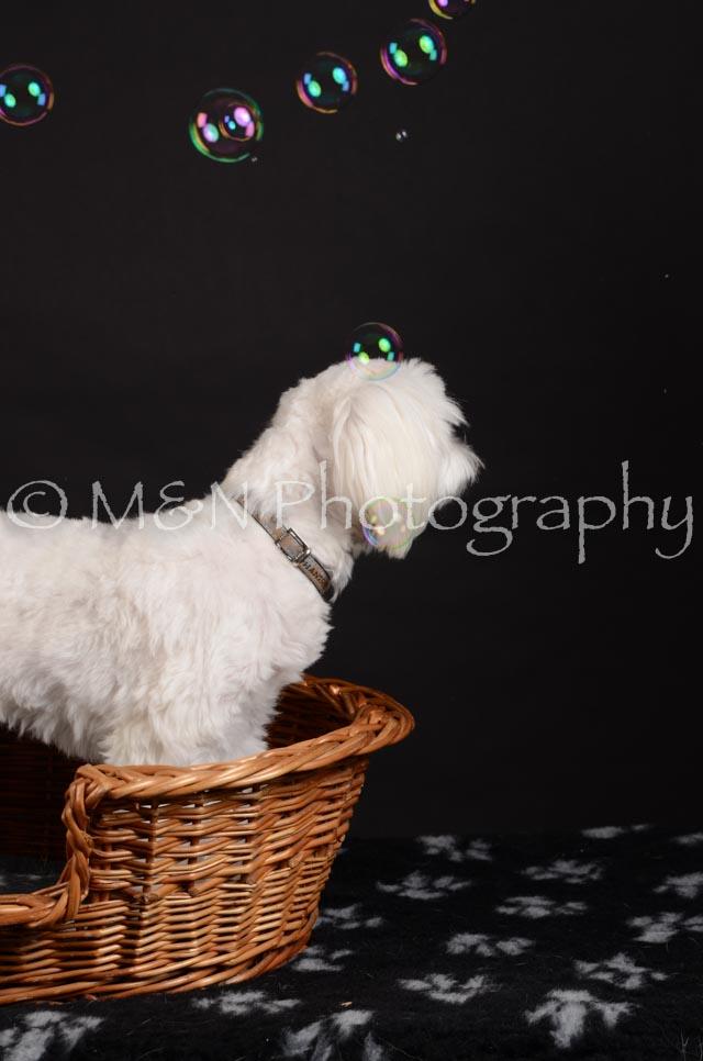 M&N Photography -DSC_5532