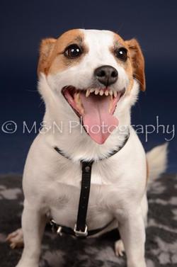 M&N Photography -DSC_0320