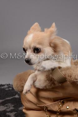 M&N Photography -DSC_1650