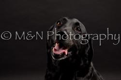 M&N Photography -DSC_0068