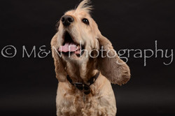 M&N Photography -DSC_0213