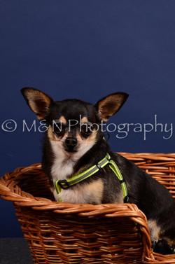 M&N Photography -IMG_4497