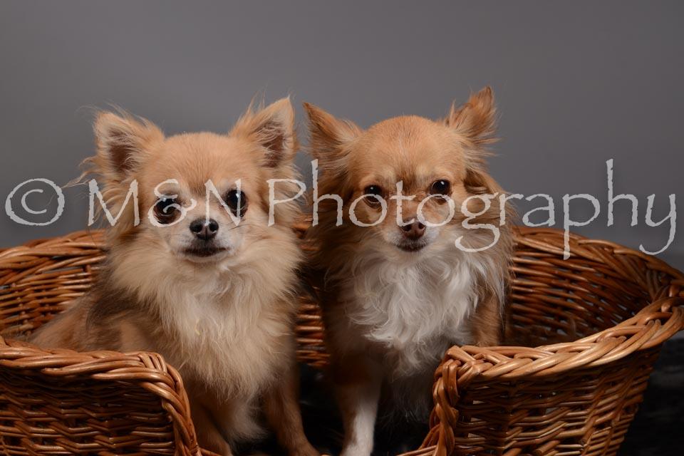 M&N Photography -DSC_1824