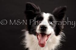M&N Photography -DSC_0149