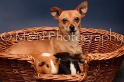 M&N Photography -DSC_4745