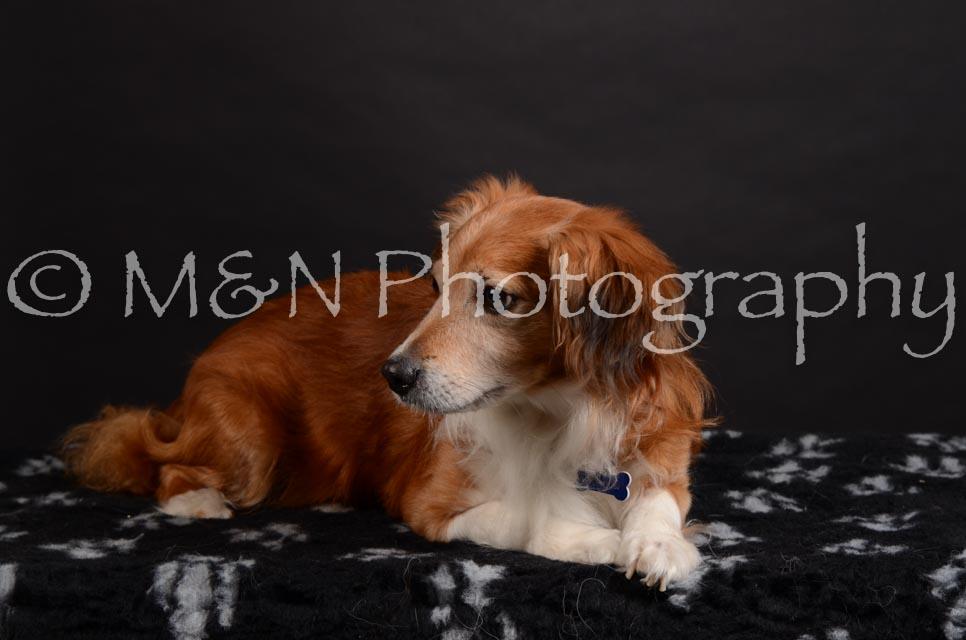 M&N Photography -DSC_5450