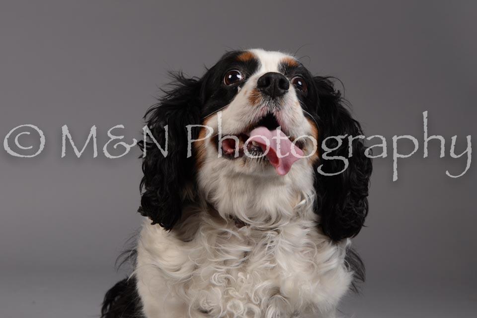 M&N Photography -DSC_1980