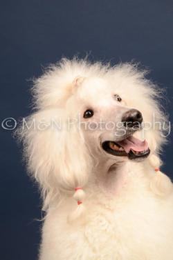 M&N Photography -DSC_3844