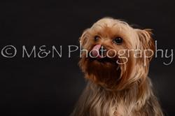 M&N Photography -DSC_9698