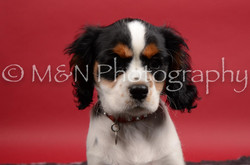 M&N Photography -DSC_8462