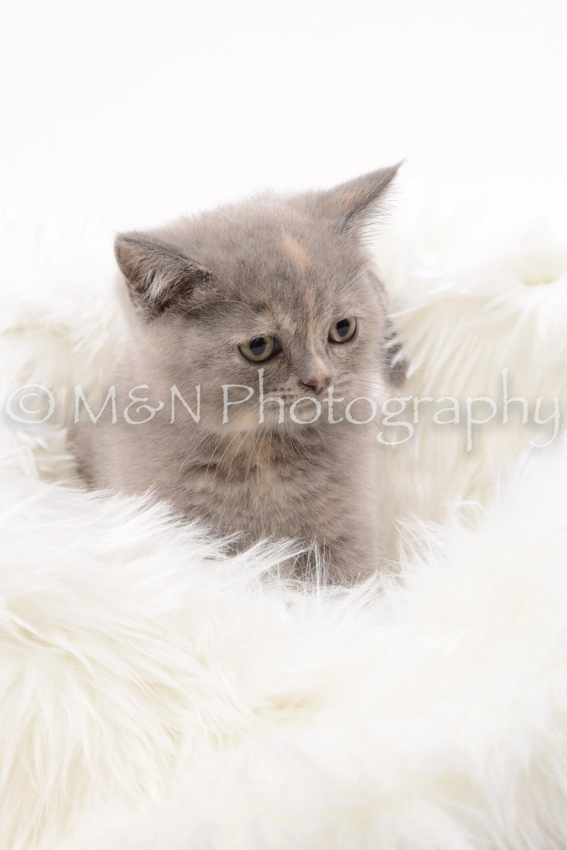 M&N Photography -DSC_8843