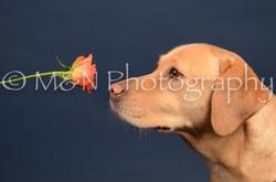 M&N Photography -DSC_4041