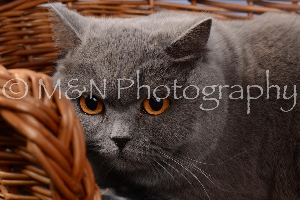 M&N Photography -DSC_6845