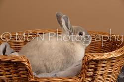 M&N Photography -_SNB0504