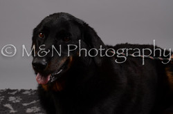 M&N Photography -DSC_2788