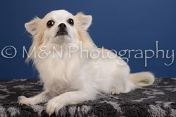 M&N Photography -DSC_5062