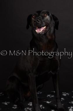 M&N Photography -DSC_5789