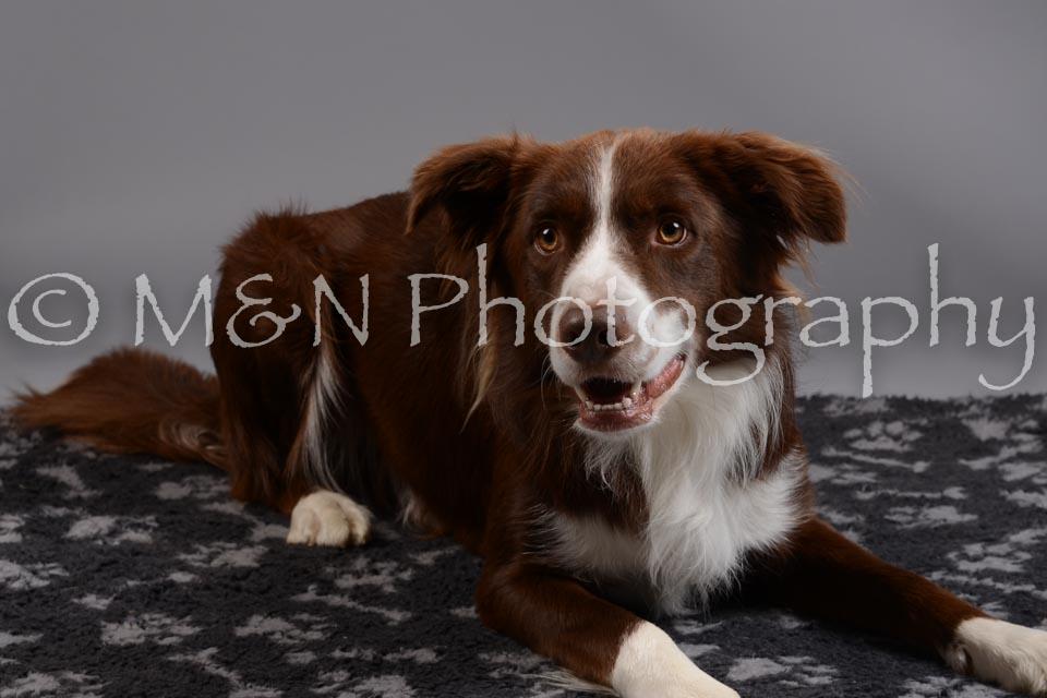 M&N Photography -DSC_1457