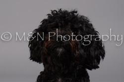 M&N Photography -DSC_2639