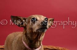 M&N Photography -DSC_8663