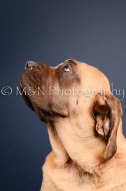 M&N Photography -DSC_3732