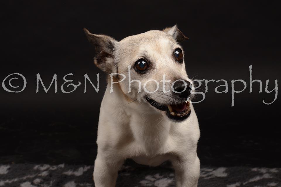 M&N Photography -DSC_0101