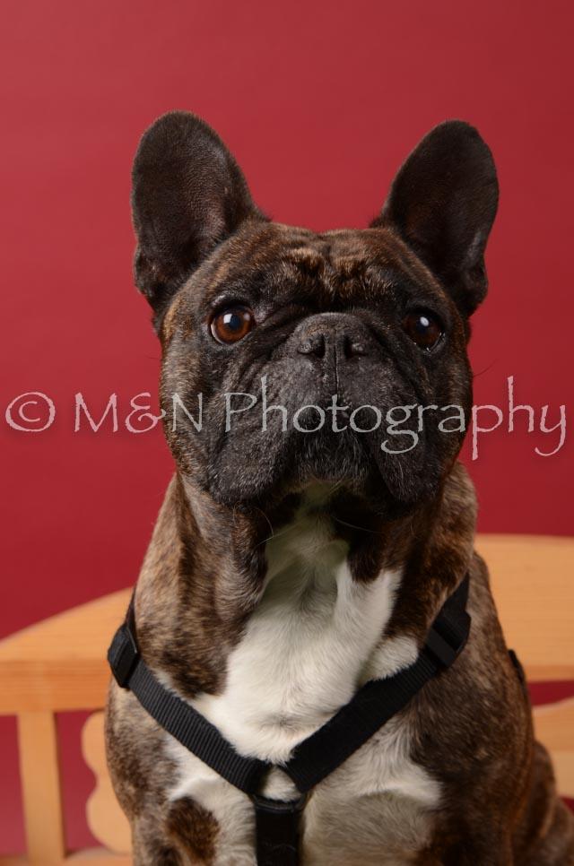 M&N Photography -DSC_6646