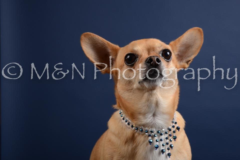 M&N Photography -DSC_3839