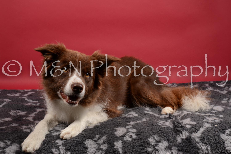 M&N Photography -DSC_8513
