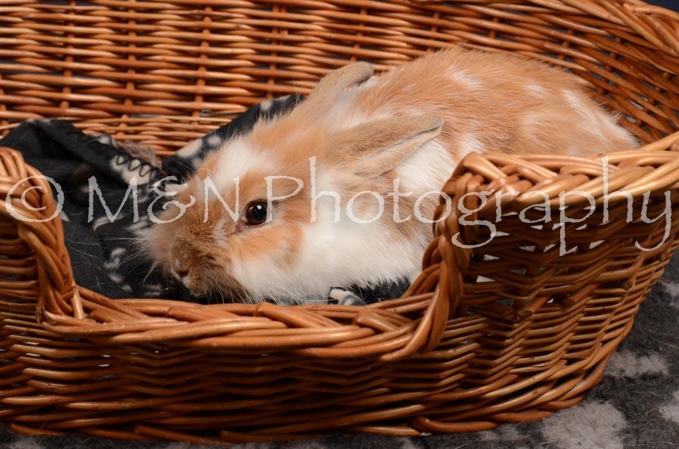 M&N Photography -DSC_0782