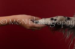 M&N Photography -DSC_3325