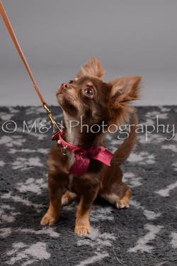 M&N Photography -DSC_2551