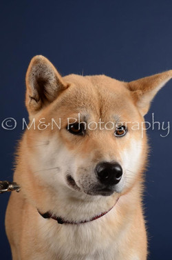M&N Photography -DSC_3899