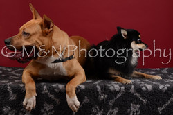 M&N Photography -DSC_3217-2