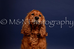 M&N Photography -IMG_4634