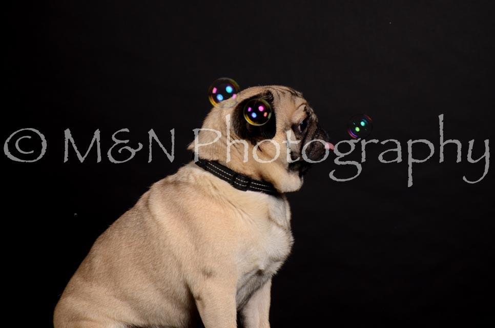 M&N Photography -DSC_5651