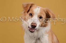 M&N Photography -DSC_4500