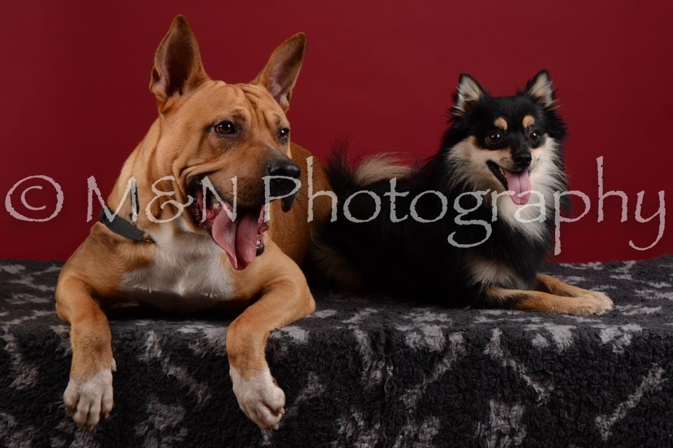 M&N Photography -DSC_3219