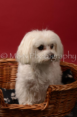 M&N Photography -DSC_6819