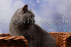 M&N Photography -DSC_6978