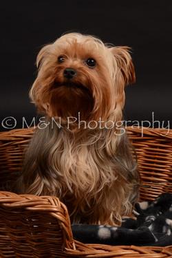 M&N Photography -DSC_9710
