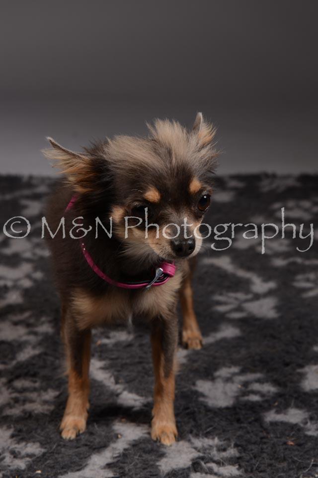 M&N Photography -DSC_2238