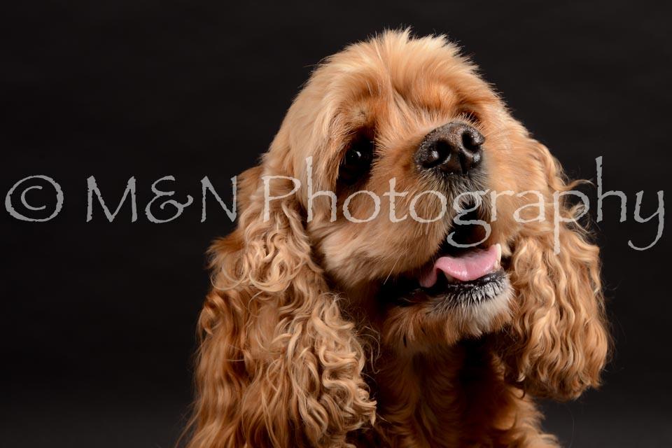 M&N Photography -DSC_9842