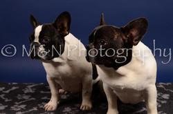 M&N Photography -IMG_4734