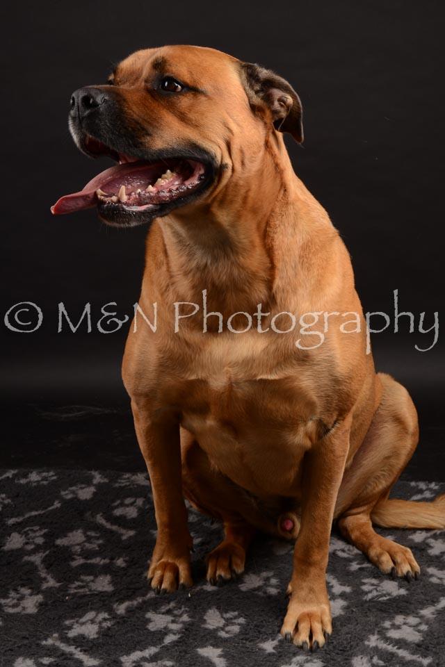 M&N Photography -DSC_0185
