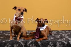 M&N Photography -DSC_4644