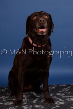 M&N Photography -DSC_5134
