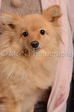 M&N Photography -DSC_3135